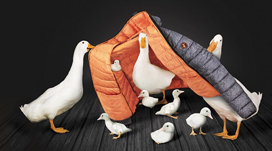 Las chaquetas térmicas Save the Duck no utilizan plumas de animales.